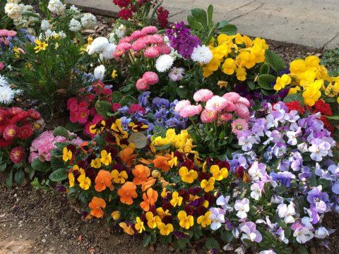 文京区、川沿いの公園に植えられた花