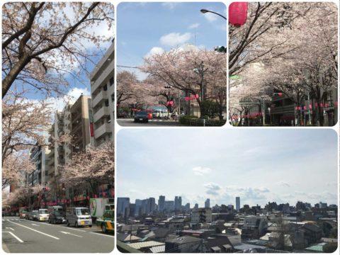 中野駅近くの桜と、ビルの屋上からの空